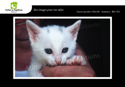 images/ClassGrandes/Animaux/Frederic-Horiz-Animaux9.jpg